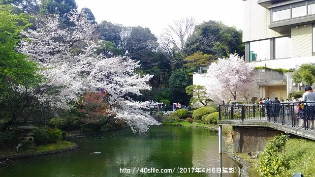 椿山荘桜0406