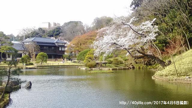 新江戸川公園桜0406
