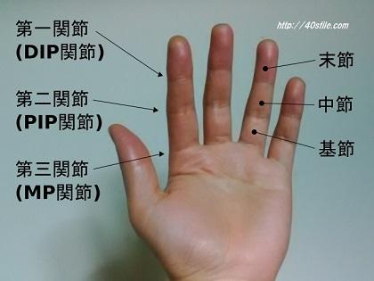 指の関節(第一関節、第二関節、第三関節)