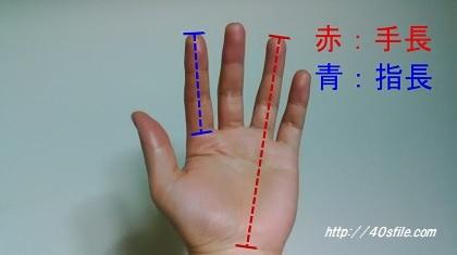 指の長さとは?手長、指長